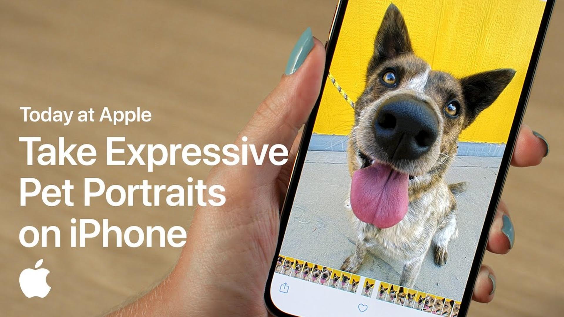 Poradnik Apple: Jak fotografować zwierzęta przy pomocy iPhone'a